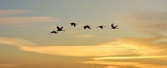 Vögel Sonnenuntergang Ausschnitt