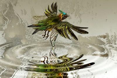 Vogel-Wasser-Leichtigkeit